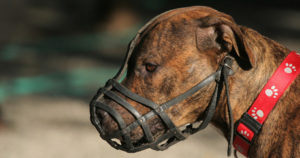 file_196_column_why-do-dogs-need-a-muzzle